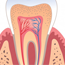 Conservative Dentistry And Endodontics